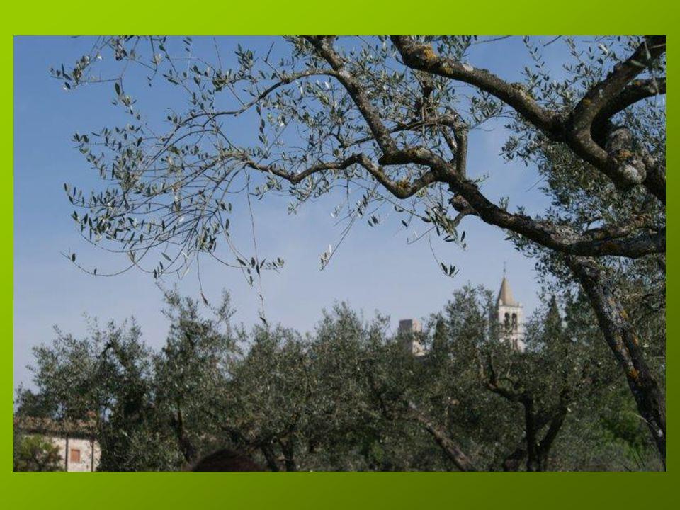 Petite halte spirituelle, en cours de route et sous les oliviers, pour découvrir les rencontres de St François avec le lépreux et avec le Christ en croix dans la Chapelle de San Damiano.