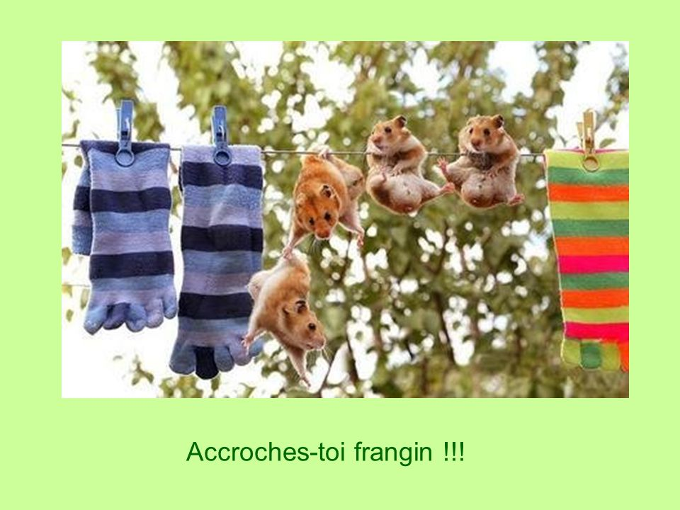 Accroches-toi frangin !!!