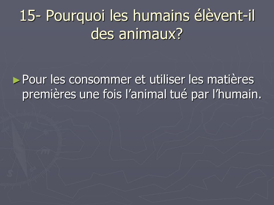 15- Pourquoi les humains élèvent-il des animaux? ► Pour les consommer et utiliser les matières premières une fois l'animal tué par l'humain.