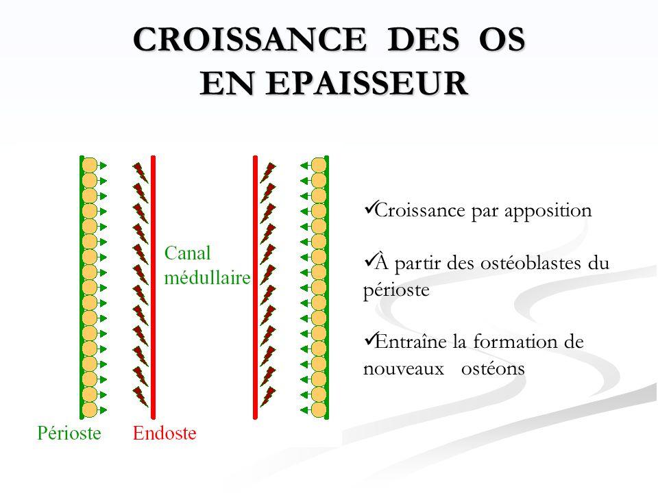 CROISSANCE DES OS EN EPAISSEUR  Croissance par apposition  À partir des ostéoblastes du périoste  Entraîne la formation de nouveaux ostéons