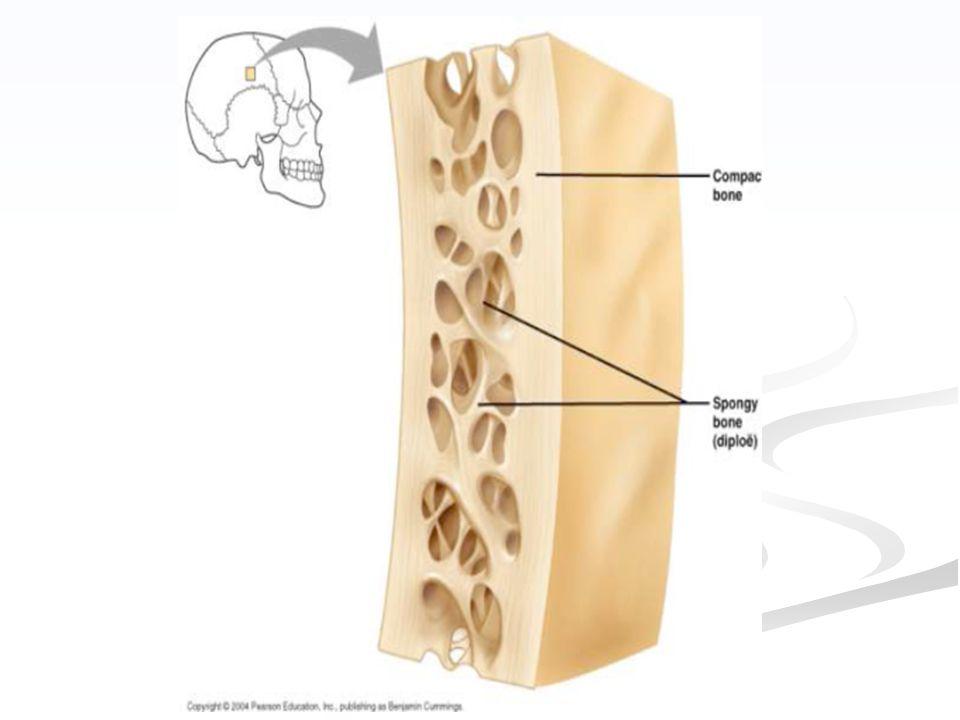 Les mécanismes qui mènent a l'élaboration d'un os sont très complexes.