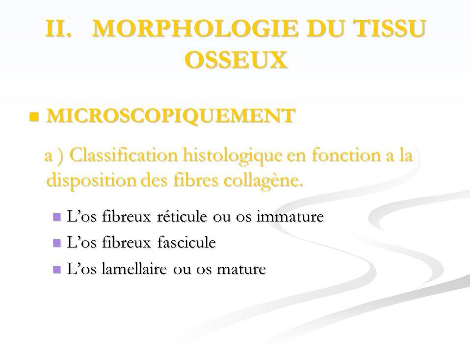 II. MORPHOLOGIE DU TISSU OSSEUX  MICROSCOPIQUEMENT a ) Classification histologique en fonction a la disposition des fibres collagène. a ) Classificat
