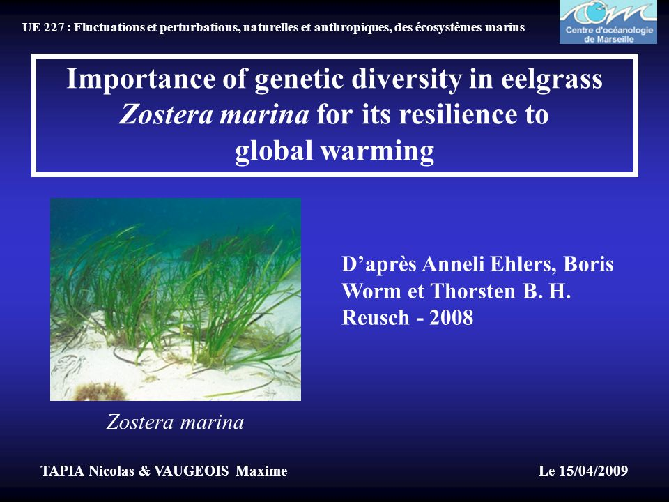 Importance of genetic diversity in eelgrass Zostera marina for its resilience to global warming D'après Anneli Ehlers, Boris Worm et Thorsten B.