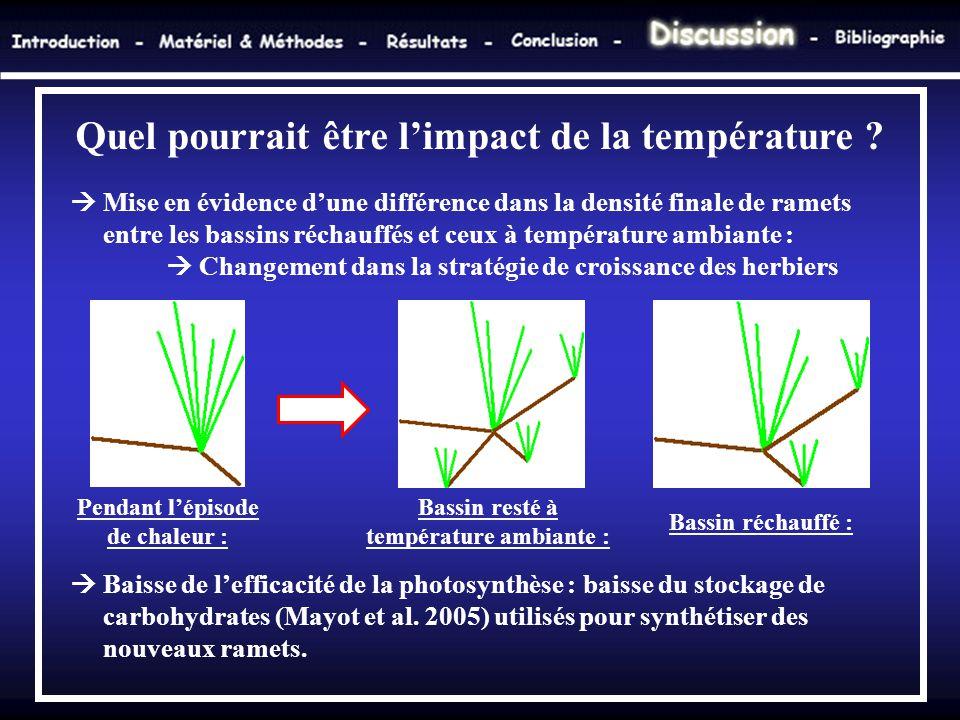  Mise en évidence d'une différence dans la densité finale de ramets entre les bassins réchauffés et ceux à température ambiante :  Changement dans l