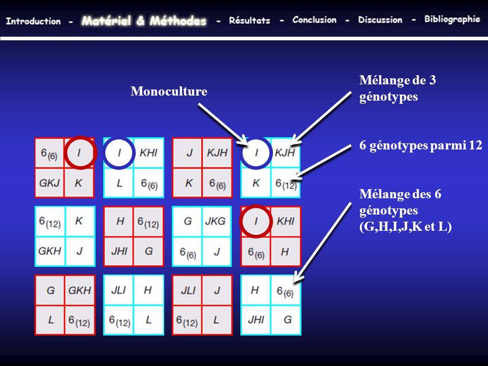 Monoculture Mélange de 3 génotypes 6 génotypes parmi 12 Mélange des 6 génotypes (G,H,I,J,K et L)
