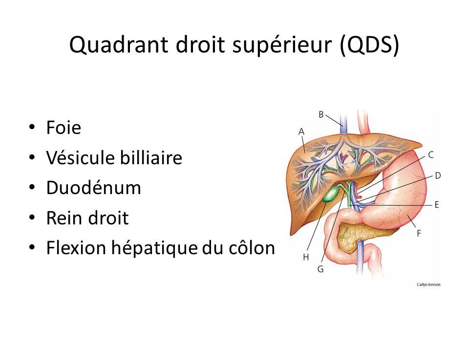 Quadrant droit supérieur (QDS) • Foie • Vésicule billiaire • Duodénum • Rein droit • Flexion hépatique du côlon