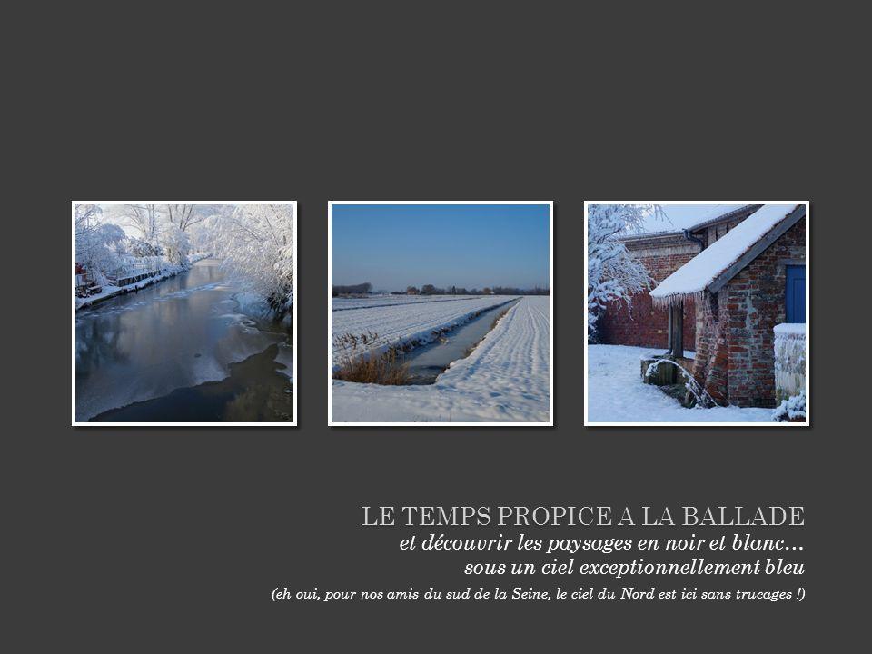 LE TEMPS PROPICE A LA BALLADE et découvrir les paysages en noir et blanc… sous un ciel exceptionnellement bleu (eh oui, pour nos amis du sud de la Seine, le ciel du Nord est ici sans trucages !)