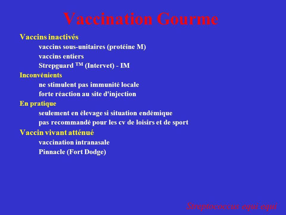 Vaccination Gourme Vaccins inactivés vaccins sous-unitaires (protéine M) vaccins entiers Strepguard TM (Intervet) - IM Inconvénients ne stimulent pas