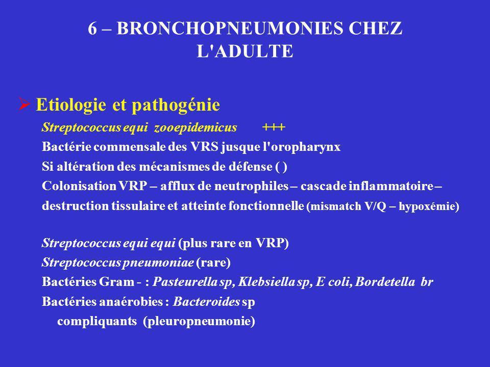 6 – BRONCHOPNEUMONIES CHEZ L'ADULTE  Etiologie et pathogénie Streptococcus equi zooepidemicus +++ Bactérie commensale des VRS jusque l'oropharynx Si