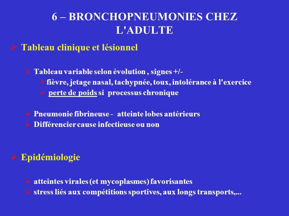 6 – BRONCHOPNEUMONIES CHEZ L'ADULTE  Tableau clinique et lésionnel  Tableau variable selon évolution, signes +/-  fièvre, jetage nasal, tachypnée,