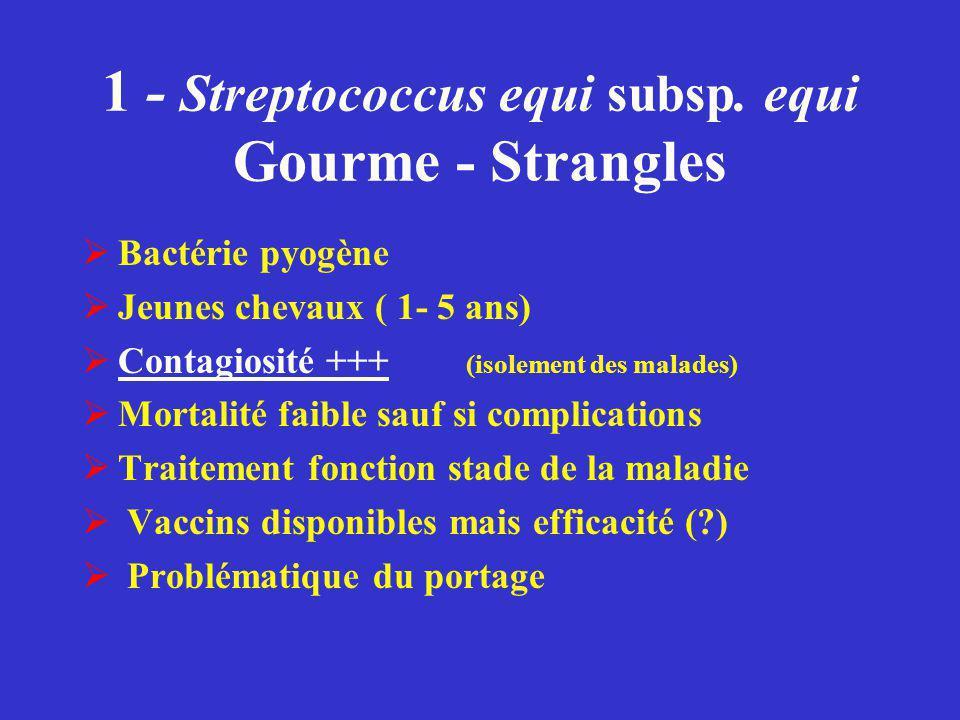 1 - Streptococcus equi subsp. equi Gourme - Strangles  Bactérie pyogène  Jeunes chevaux ( 1- 5 ans)  Contagiosité +++ (isolement des malades)  Mor
