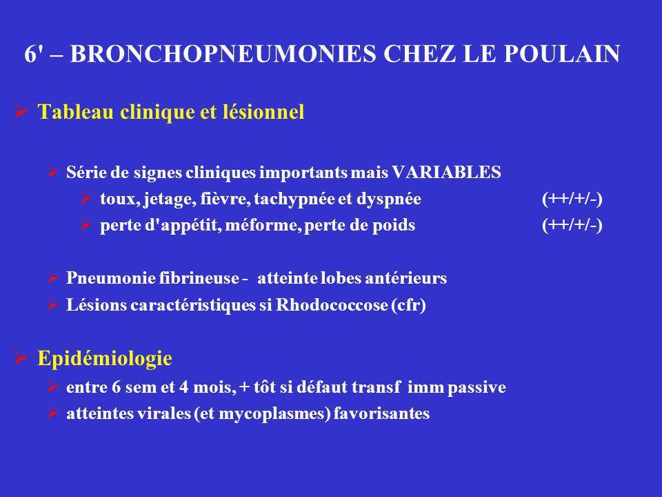 6' – BRONCHOPNEUMONIES CHEZ LE POULAIN  Tableau clinique et lésionnel  Série de signes cliniques importants mais VARIABLES  toux, jetage, fièvre, t