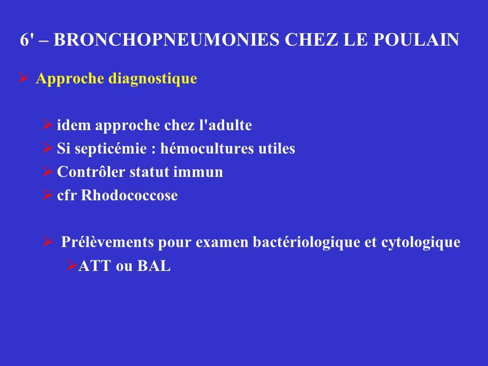 6' – BRONCHOPNEUMONIES CHEZ LE POULAIN  Approche diagnostique  idem approche chez l'adulte  Si septicémie : hémocultures utiles  Contrôler statut