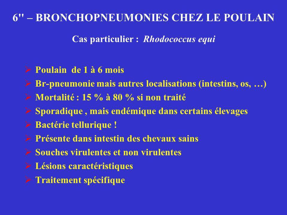 6'' – BRONCHOPNEUMONIES CHEZ LE POULAIN Cas particulier : Rhodococcus equi  Poulain de 1 à 6 mois  Br-pneumonie mais autres localisations (intestins