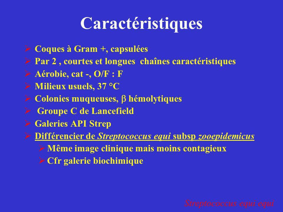 Caractéristiques  Coques à Gram +, capsulées  Par 2, courtes et longues chaînes caractéristiques  Aérobie, cat -, O/F : F  Milieux usuels, 37 °C 
