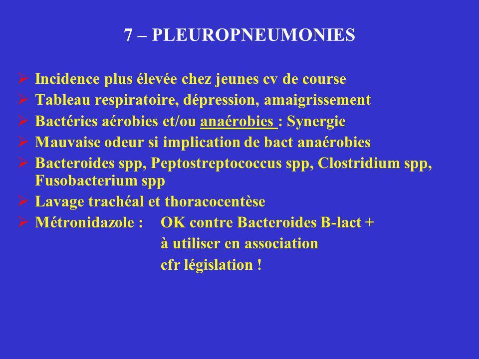 7 – PLEUROPNEUMONIES  Incidence plus élevée chez jeunes cv de course  Tableau respiratoire, dépression, amaigrissement  Bactéries aérobies et/ou an