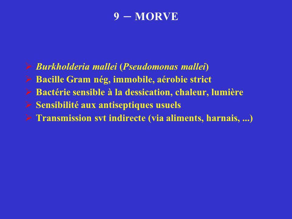 9 – MORVE  Burkholderia mallei (Pseudomonas mallei)  Bacille Gram nég, immobile, aérobie strict  Bactérie sensible à la dessication, chaleur, lumiè