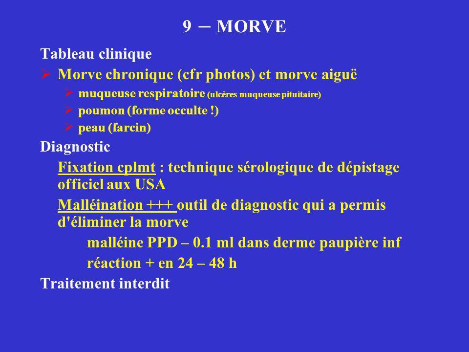 9 – MORVE Tableau clinique  Morve chronique (cfr photos) et morve aiguë  muqueuse respiratoire (ulcères muqueuse pituitaire)  poumon (forme occulte