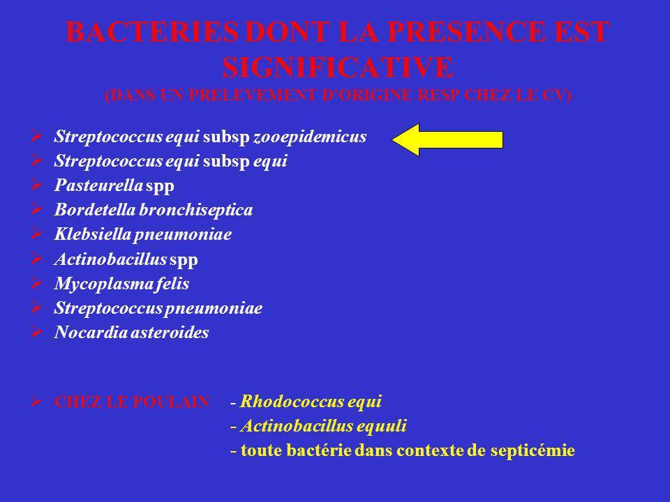 BACTERIES DONT LA PRESENCE EST SIGNIFICATIVE (DANS UN PRELEVEMENT D'ORIGINE RESP CHEZ LE CV)  Streptococcus equi subsp zooepidemicus  Streptococcus