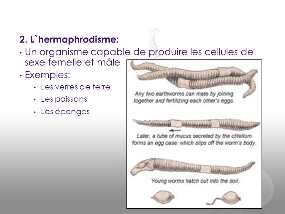 2. L`hermaphrodisme: • Un organisme capable de produire les cellules de sexe femelle et mâle • Exemples: • Les verres de terre • Les poissons • Les ép