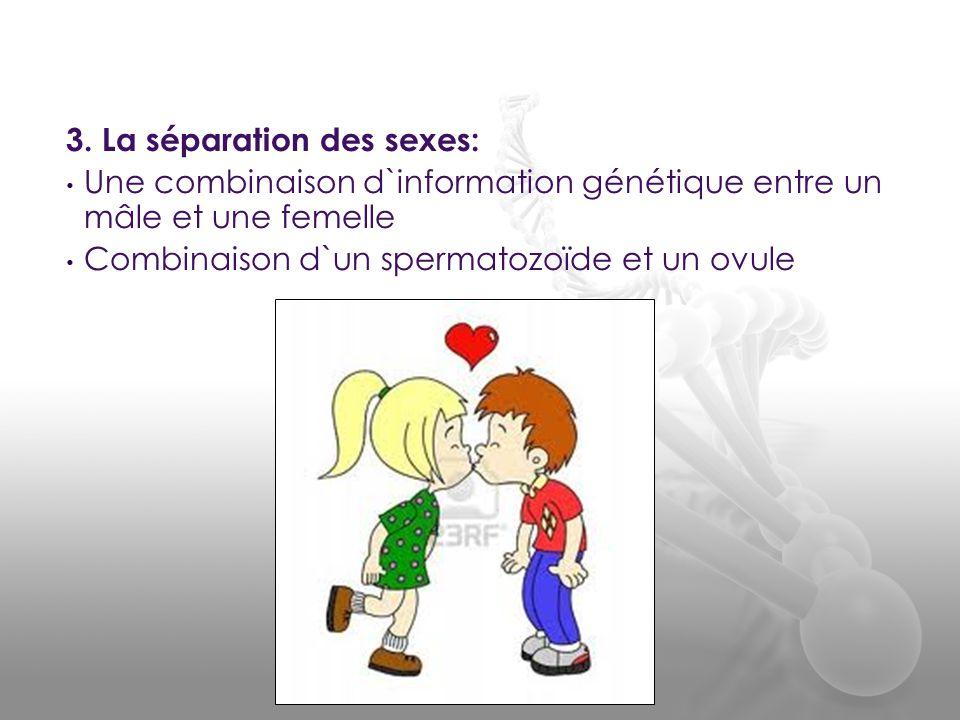 3. La séparation des sexes: • Une combinaison d`information génétique entre un mâle et une femelle • Combinaison d`un spermatozoïde et un ovule