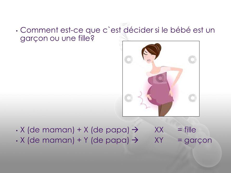 • Comment est-ce que c`est décider si le bébé est un garçon ou une fille? • X (de maman) + X (de papa)  XX= fille • X (de maman) + Y (de papa)  XY=