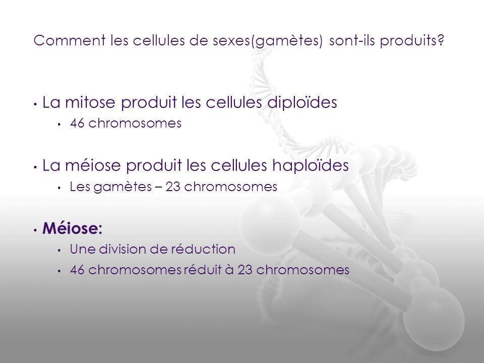 • La mitose produit les cellules diploïdes • 46 chromosomes • La méiose produit les cellules haploïdes • Les gamètes – 23 chromosomes • Méiose: • Une