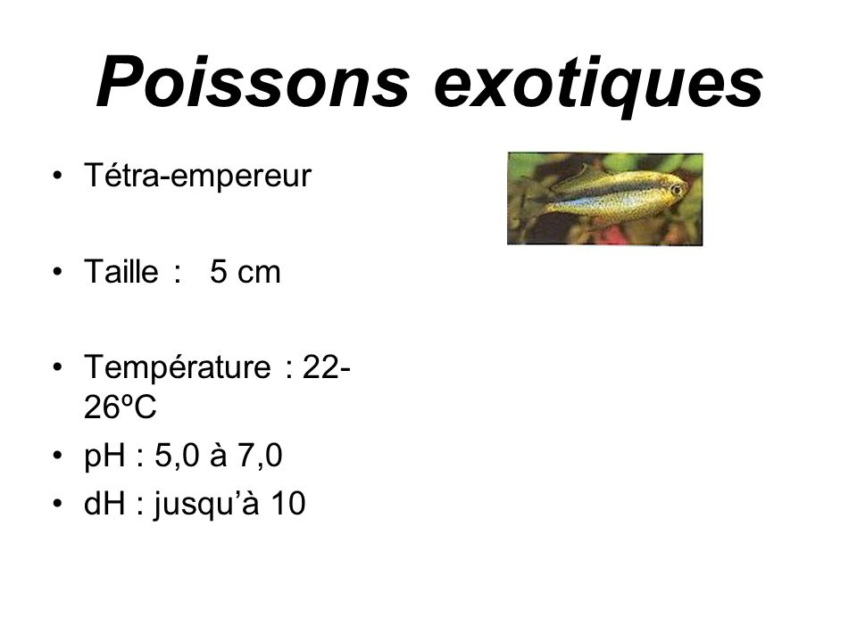 Poissons exotiques •Poisson-hachette commun •Taille : < 6,5 cm •Température : 22- 28ºC •pH : 6,0 à 7,0 •dH : 5 à 15