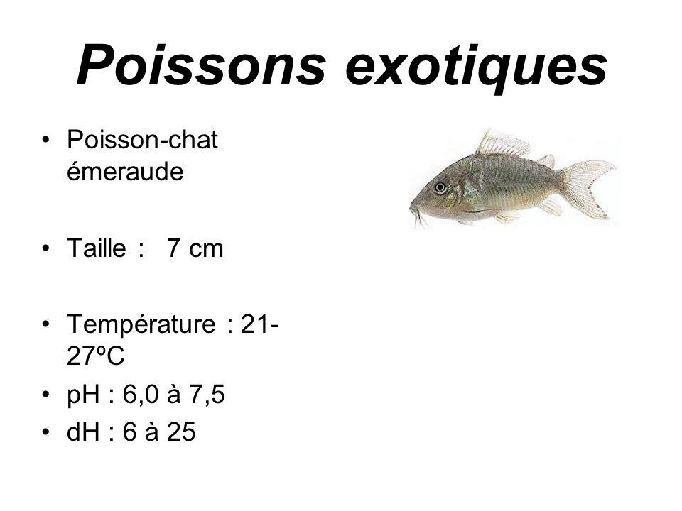 Poissons exotiques •Poisson-chat émeraude •Taille : 7 cm •Température : 21- 27ºC •pH : 6,0 à 7,5 •dH : 6 à 25
