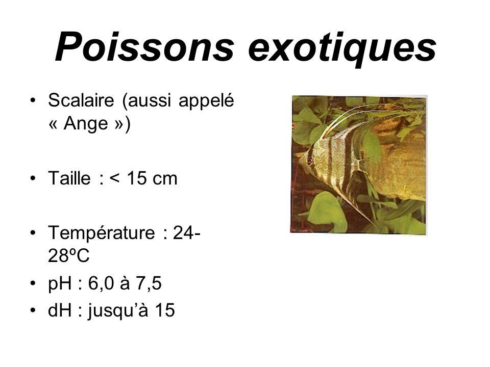 Poissons exotiques •Scalaire (aussi appelé « Ange ») •Taille : < 15 cm •Température : 24- 28ºC •pH : 6,0 à 7,5 •dH : jusqu'à 15