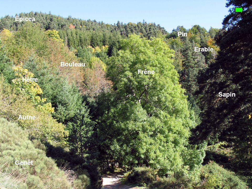 La biodiversité Un thème scientifique proposé pour des projets sur l'environnement
