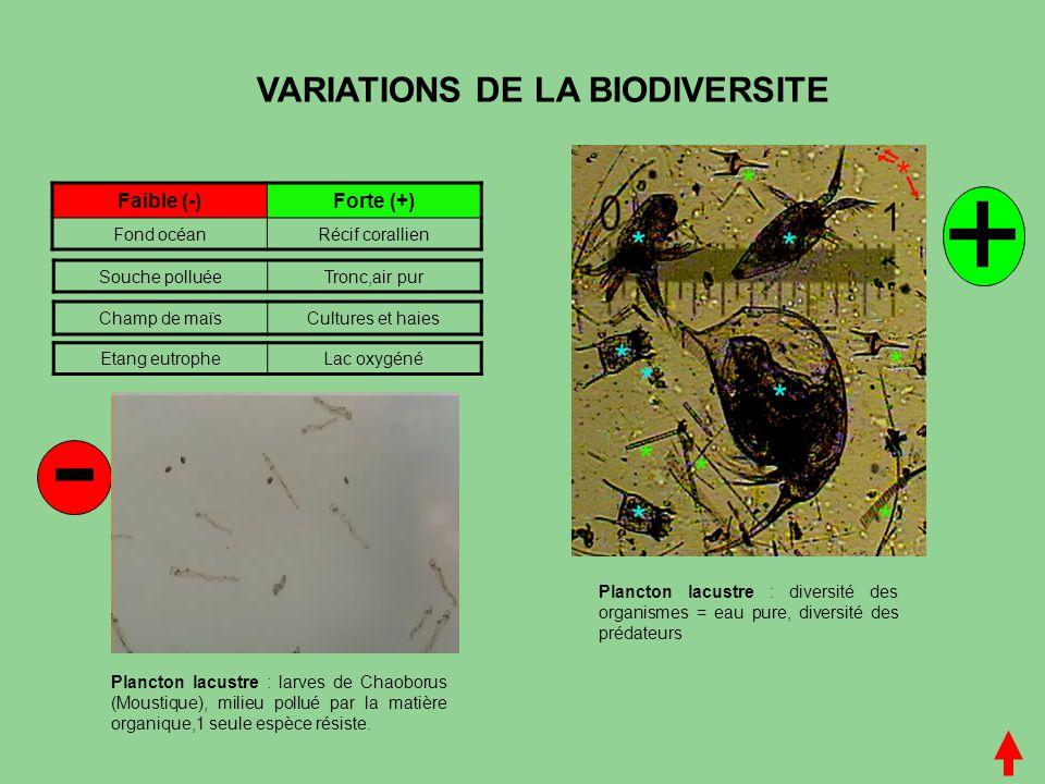VARIATIONS DE LA BIODIVERSITE Faible (-)Forte (+) Fond océanRécif corallien Champ de maïsCultures et haies Souche polluéeTronc,air pur - + Etang eutro