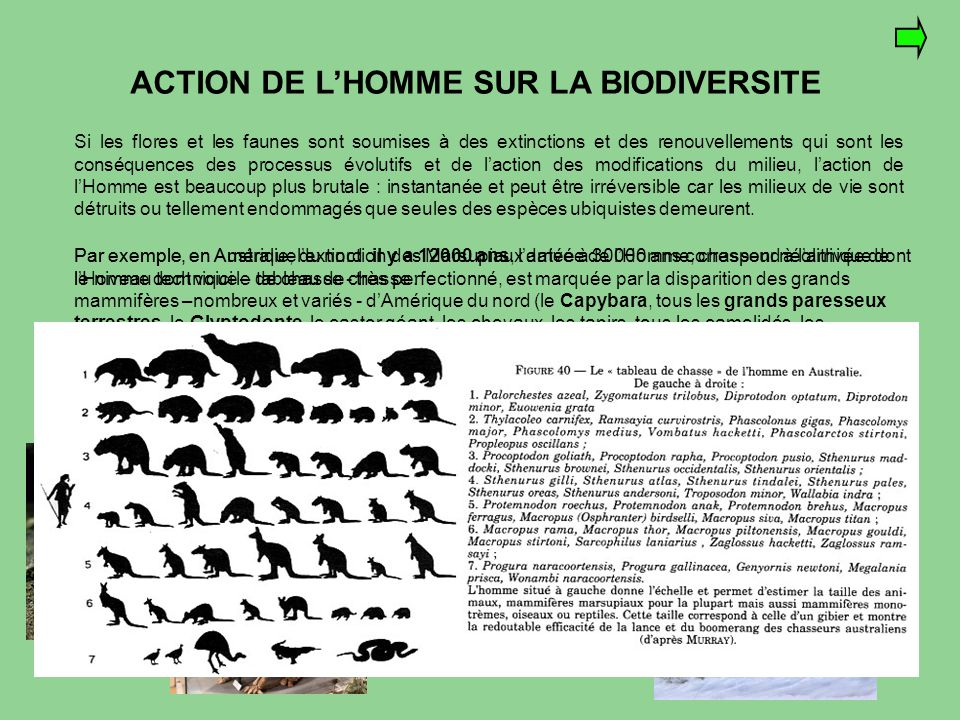 ACTION DE L'HOMME SUR LA BIODIVERSITE Si les flores et les faunes sont soumises à des extinctions et des renouvellements qui sont les conséquences des