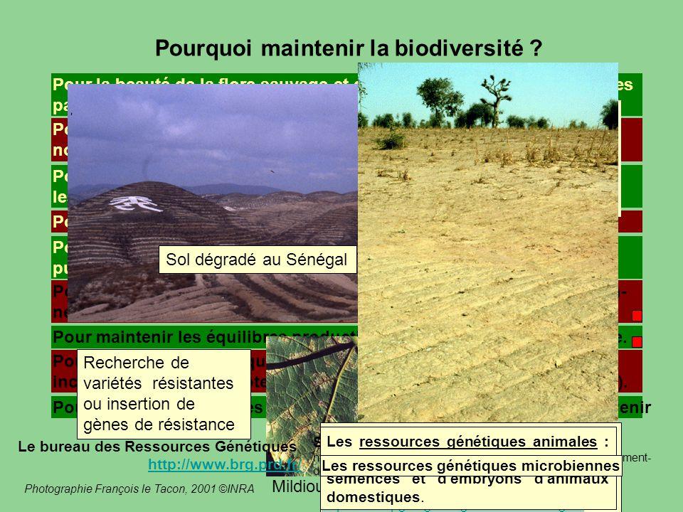 Pourquoi maintenir la biodiversité ? Pour la beauté de la flore sauvage et de la faune sauvage, la variété des paysages, le maintien de la Terre dans