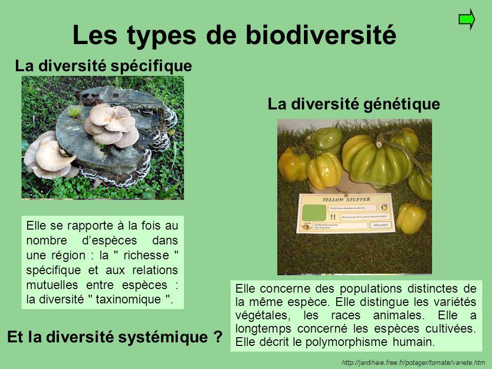 Les types de biodiversité La diversité spécifique La diversité génétique DELICATE Variété à chair fine, juteuse et délicate aux gros fruits lisses et