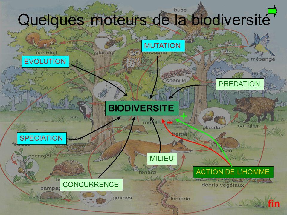 ACTION DE L'HOMME SUR LA BIODIVERSITE La conservation d'espèces : Constitution de parcs et réserves de forte protection : - des réserves biologiques domaniales qui dépendent de l O.N.F : elles sont dites intégrales ( à l abri de toute exploitation ) ou dirigées ( espèces rares et boisement étudiés scientifiquement), - des Parcs Nationaux comportant deux parties : le parc proprement dit, protégé par la Loi, et la zone périphérique où la protection est plus légère et plus souple, - des réserves naturelles, créées par décret, elles bénéficient d une large protection interdisant que soit modifié l état ou l aspect des lieux sans autorisation ministérielle préalable, - des conservatoires botaniques nationaux : 8 actuellement ayant 4 objectifs: 1.