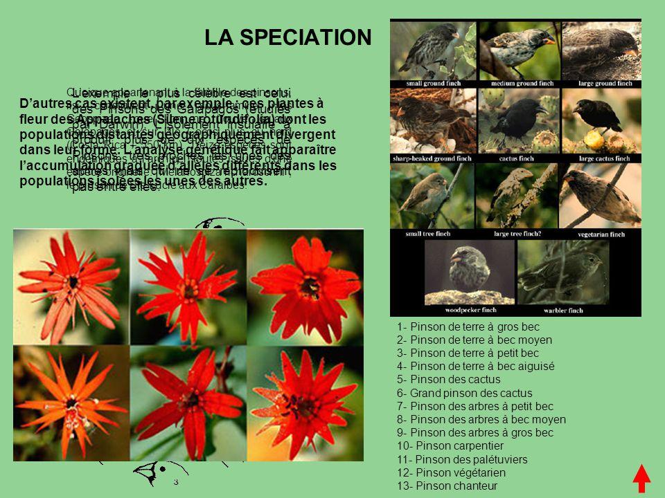 L'EVOLUTION L'évolution a été montrée paléontologiquement (exemple Cuvier, vertébrés), biologiquement (exemple Darwin), génétiquement en comparant les ADN actuels et en observant la communauté moléculaire des êtres vivants.