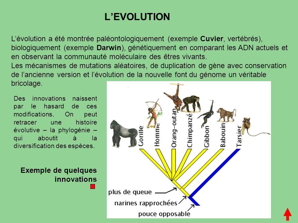 L'EVOLUTION L'évolution a été montrée paléontologiquement (exemple Cuvier, vertébrés), biologiquement (exemple Darwin), génétiquement en comparant les