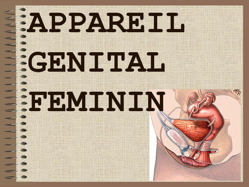 19/06/2014Dr. BAYOUD - Appareil génital féminin 52