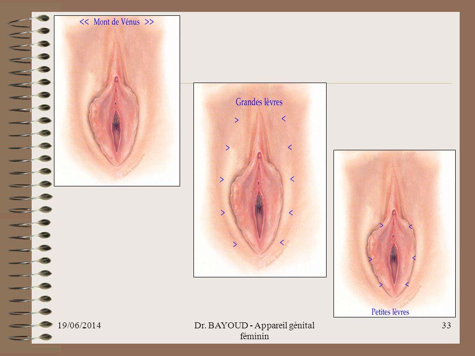 19/06/2014Dr. BAYOUD - Appareil génital féminin 33