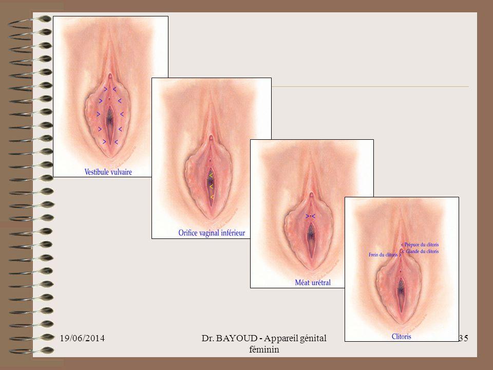 19/06/2014Dr. BAYOUD - Appareil génital féminin 35