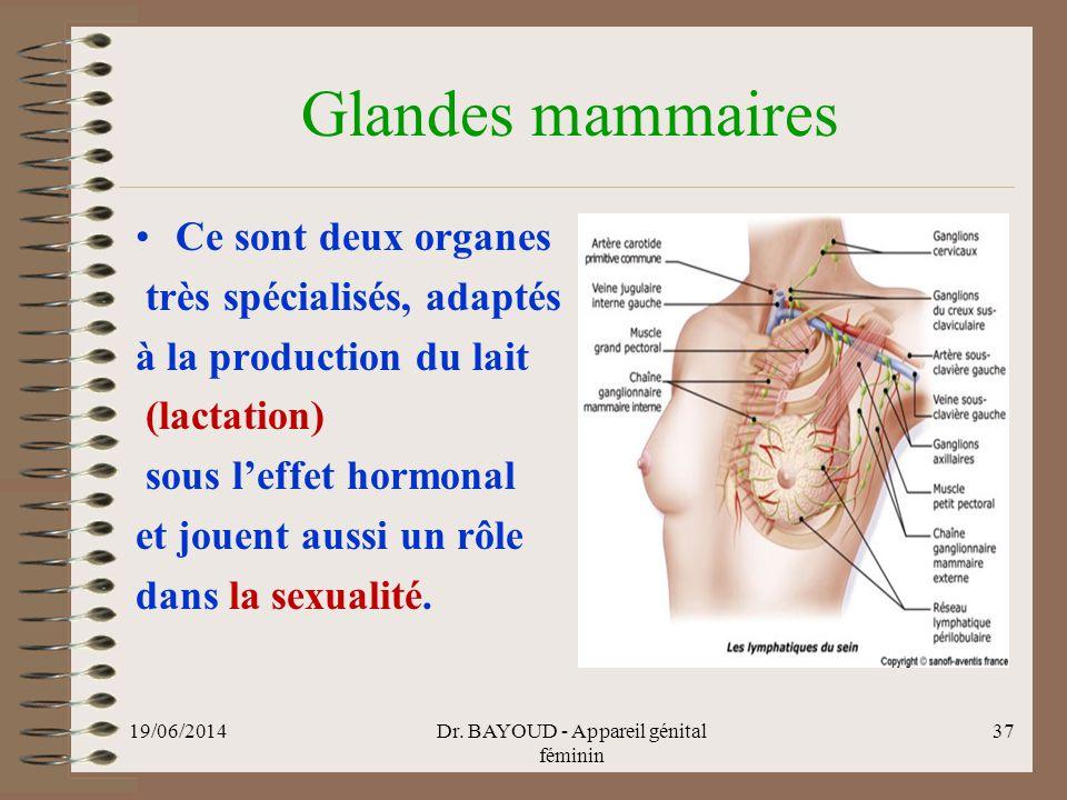 Glandes mammaires •Ce sont deux organes très spécialisés, adaptés à la production du lait (lactation) sous l'effet hormonal et jouent aussi un rôle dans la sexualité.