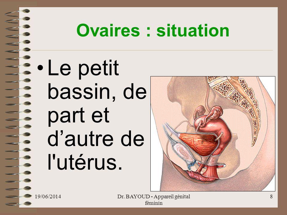 19/06/2014Dr.BAYOUD - Appareil génital féminin 29 Vagin : Structure •Adventice : tunique externe.