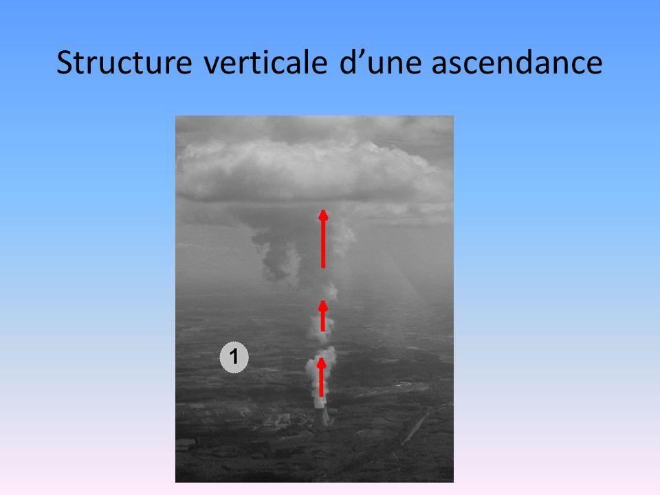 Structure verticale d'une ascendance