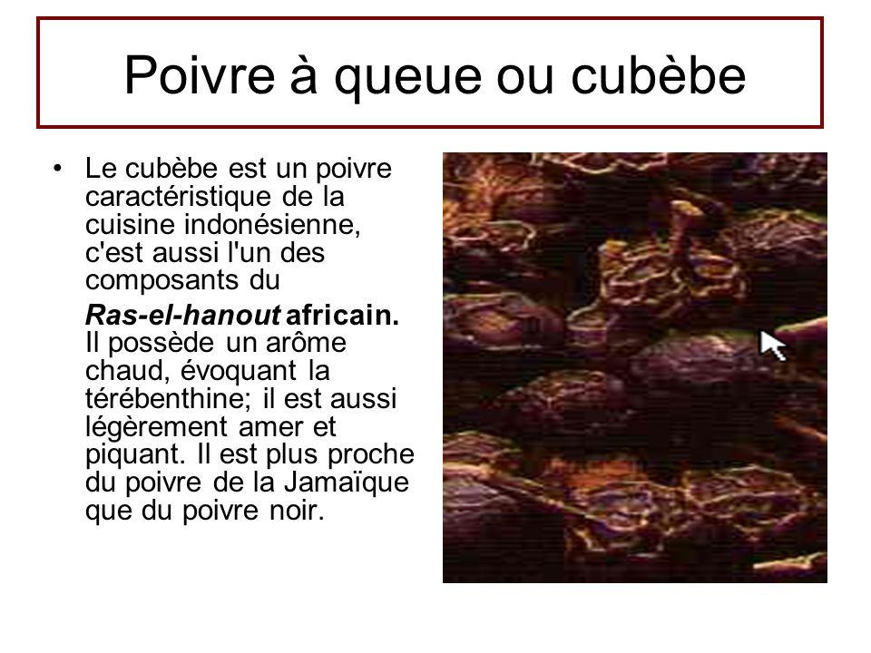 Poivre à queue ou cubèbe •Le cubèbe est un poivre caractéristique de la cuisine indonésienne, c'est aussi l'un des composants du Ras-el-hanout africai