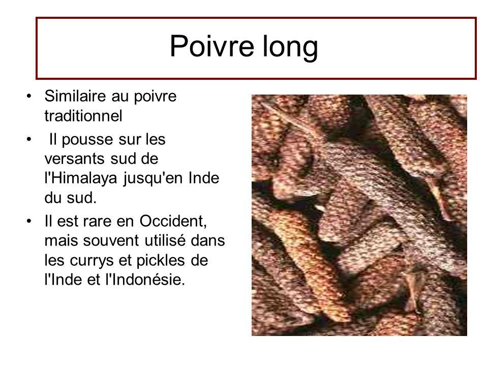 Poivre long •Similaire au poivre traditionnel • Il pousse sur les versants sud de l'Himalaya jusqu'en Inde du sud. •Il est rare en Occident, mais souv