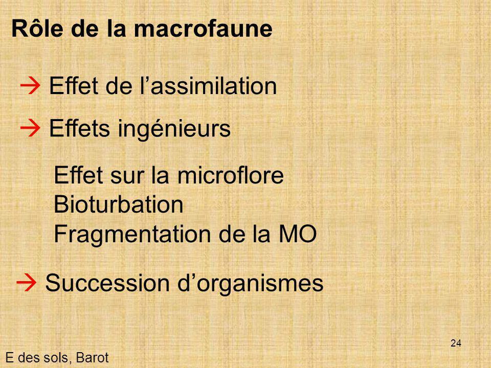 24  Effet de l'assimilation E des sols, Barot Rôle de la macrofaune  Effets ingénieurs Effet sur la microflore Bioturbation Fragmentation de la MO 