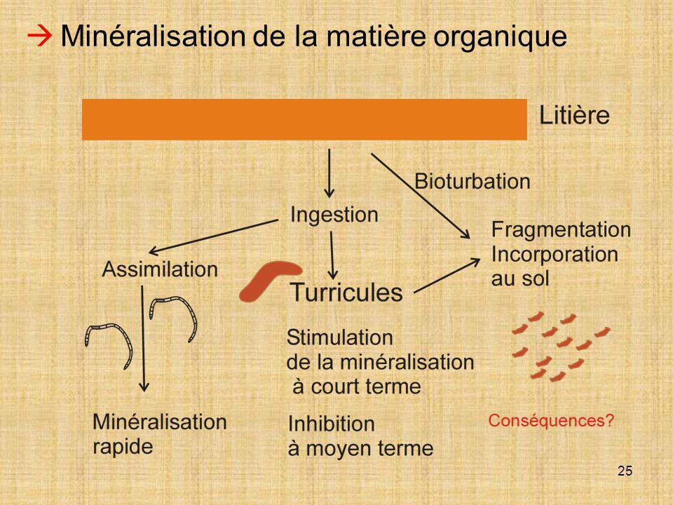 25  Minéralisation de la matière organique