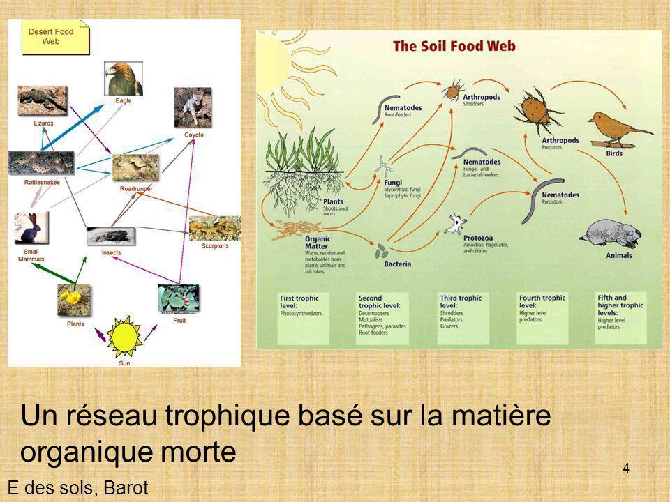 4 Un réseau trophique basé sur la matière organique morte