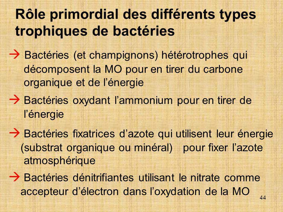 44  Bactéries (et champignons) hétérotrophes qui décomposent la MO pour en tirer du carbone organique et de l'énergie  Bactéries fixatrices d'azote